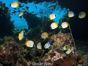 I liked this window, just under the water surface. by Olivier Notz 